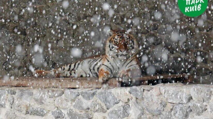 Киевский зоопарк показал, как звери встретили первый снег
