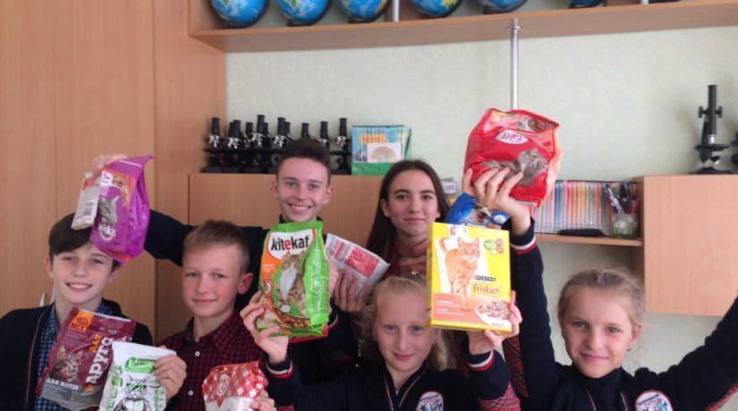 Школьники собрали более шести тонн корма для бездомных животных