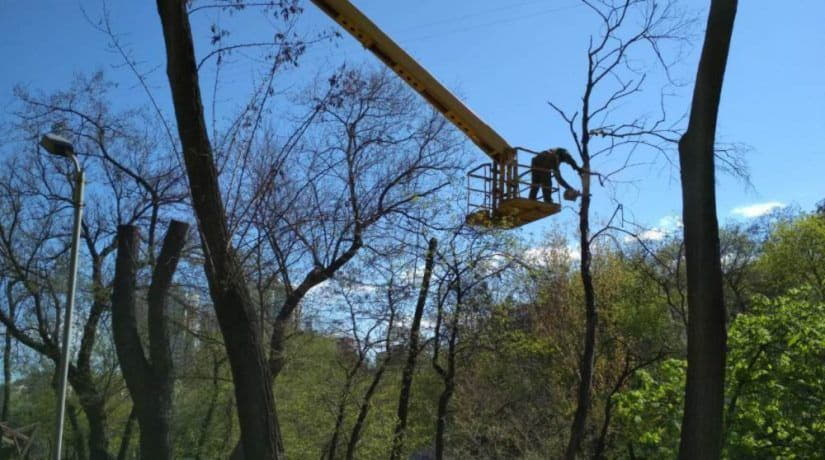 «Киевзеленбуд» объяснил причину обрезки крон деревьев
