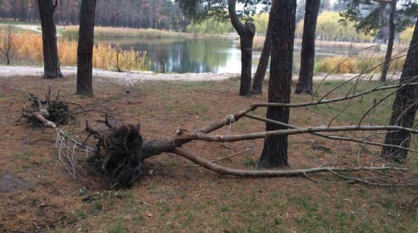 Вандалы повредили деревья