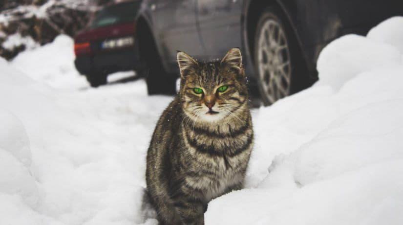 В Киеве выпал первый снег. Реакция соцсетей