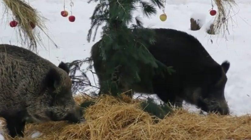 В зоопарке можно загадать желание возле символа Нового года