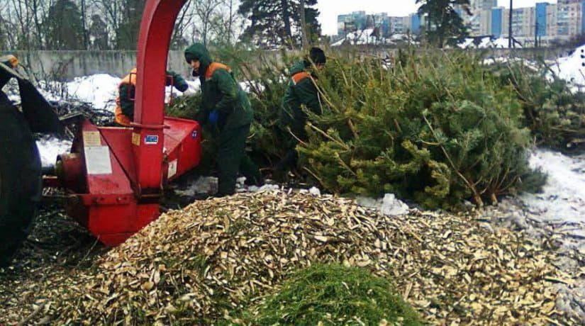 Переработка, утилизация елок