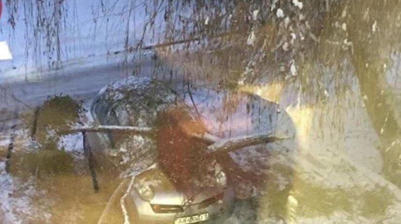 В Подольском районе дерево упало на автомобиль