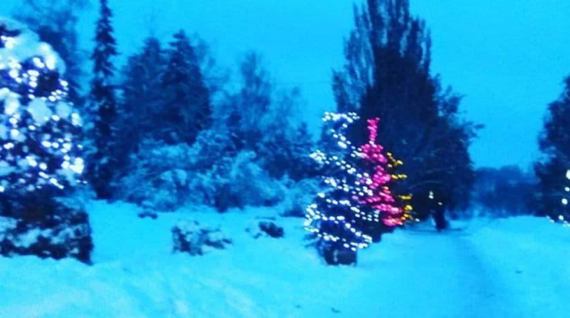 новый год, ботсад Гришко