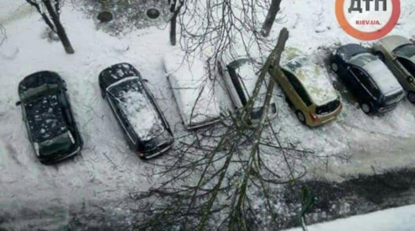 На Нивках дерево упало на автомобиль