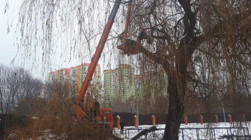 В парке «Отрадный» срезают старые ивы