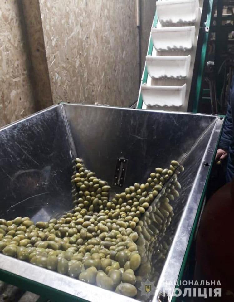 оливковое масло, фальсификат