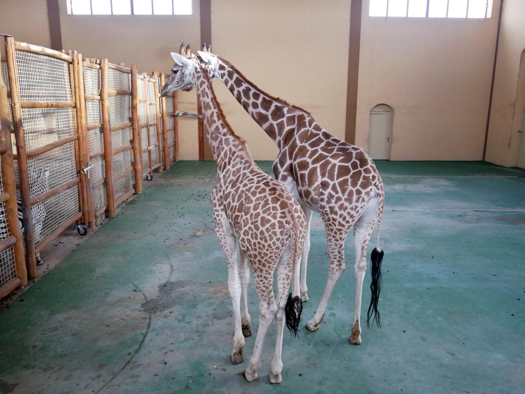 Зоопарк 12 мсяцев