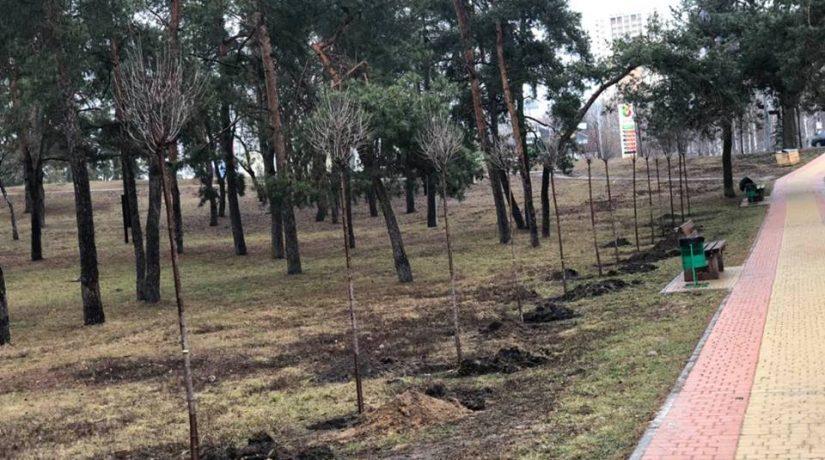 В парке Днепровского района высадили аллею сакур