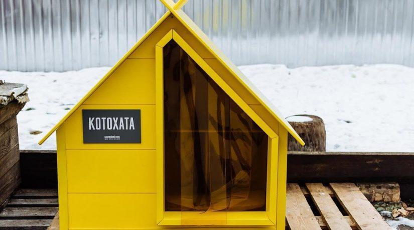 В Киеве для бездомных котов начали устанавливать «Котохаты»