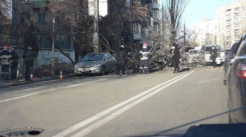 На улице Ивана Кудри упавшее дерево повредило автомобиль