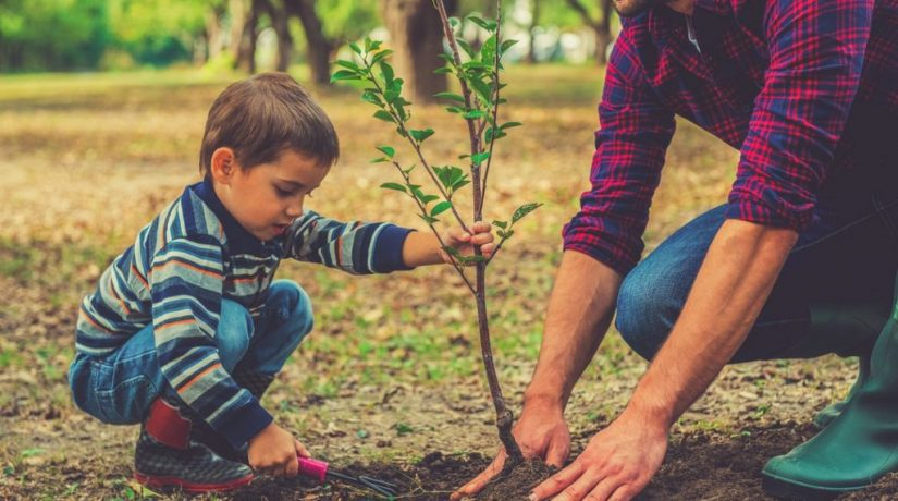 Киевлян приглашают присоединиться к высадке деревьев