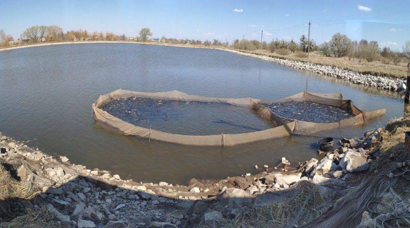 В водоемы Киевской области выпустили восемь тонн рыбы