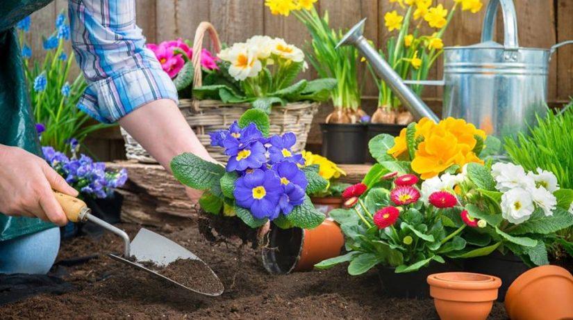 В Киеве пройдет общегородская ярмарка для садоводов, огородников и фермеров