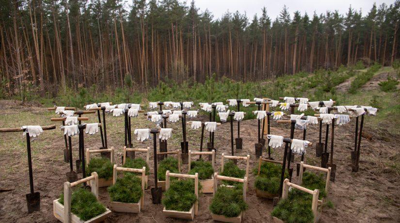 Конча-Заспа, лес, высадка