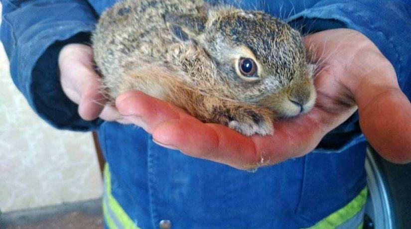 В Бородянском районе пожарные спасли зайчика из огненной ловушки