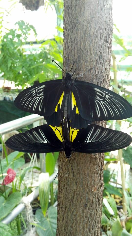 ботсад, бабочки