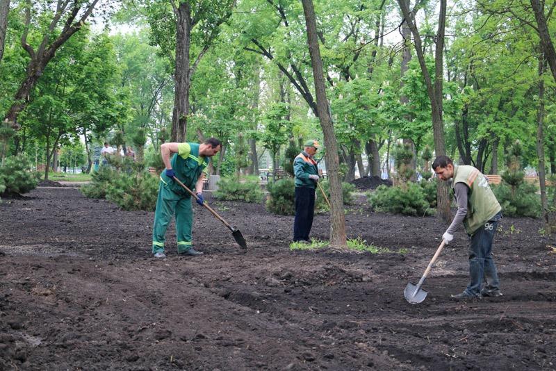 В парке на улице Винницкой высадили живую изгородь