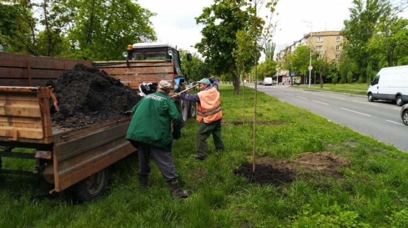 В Днепровском районе высадили 18 кленов и 300 кустов
