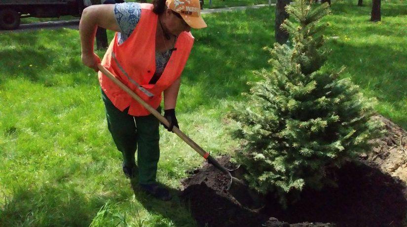 В Днепровском районе высадили 30 елок и 285 кустов