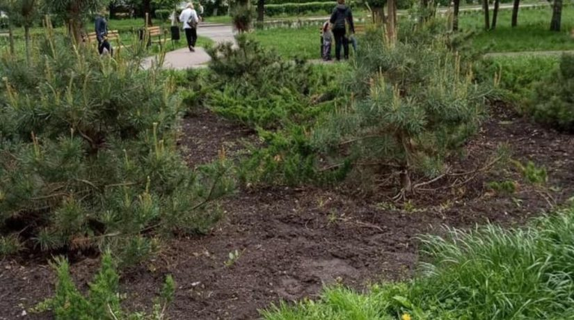 В Подольском районе массово воруют растения