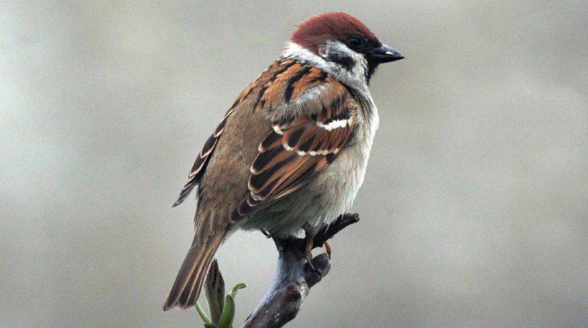 Как живется столичным птицам