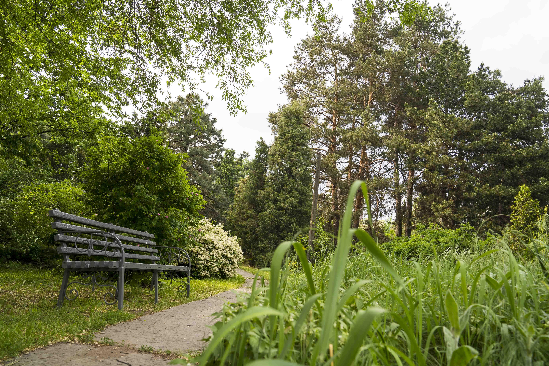 скамейка, трава, парк