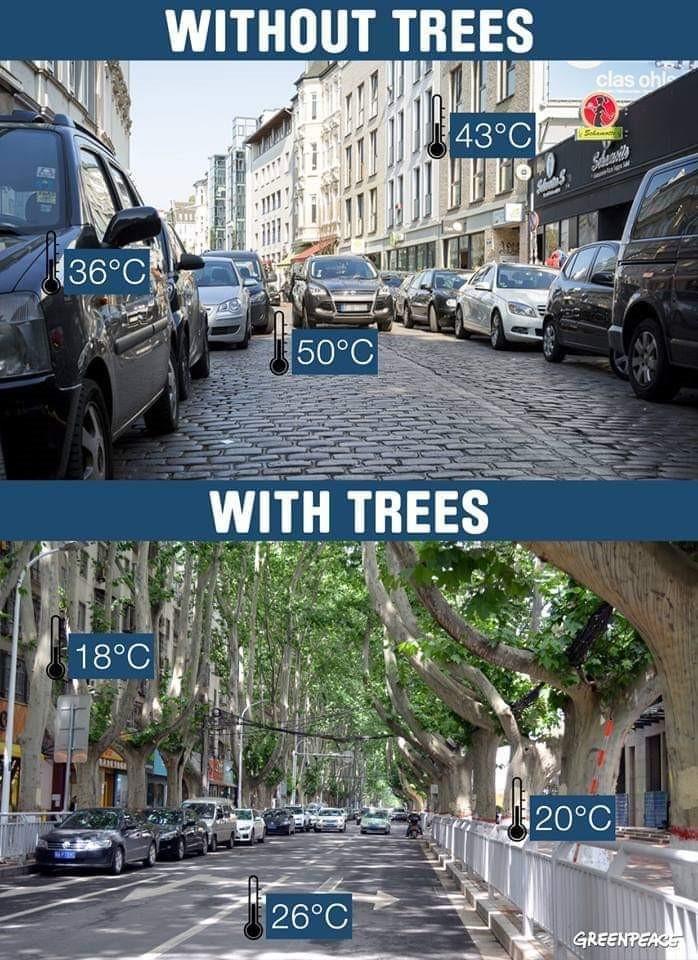 город с деревьями и без