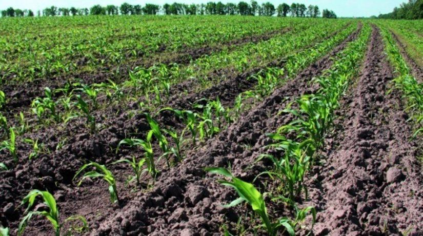 Передпосівний обробіток ґрунту та догляд за посівами