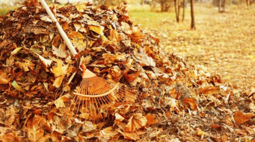 В Киеве появится комплекс по переработке опавших листьев