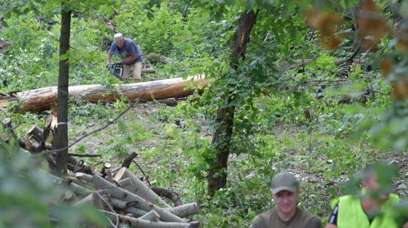 В Протасовом Яру застройщик возобновил вырубку деревьев