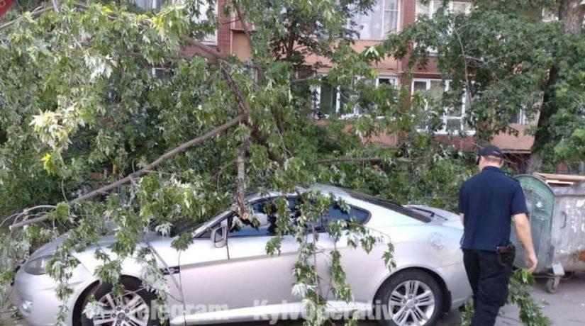 На улице Богатырской на автомобиль упало дерево