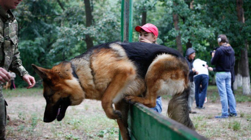 Четвероногие киевляне: что в столице полезного для собак