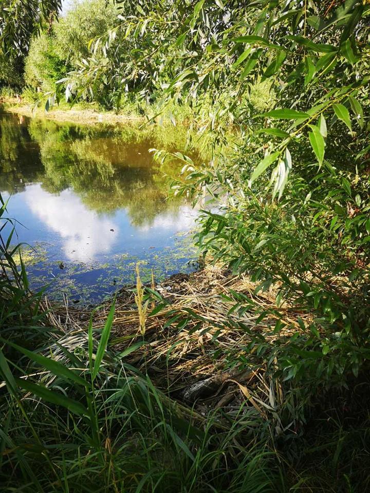 Жандарка, озеро, расчистка