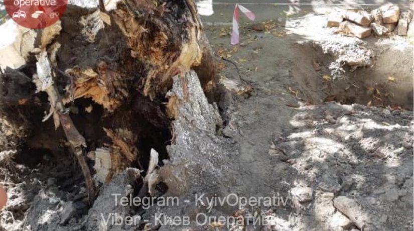 На улице Чигорина на женщину упало дерево