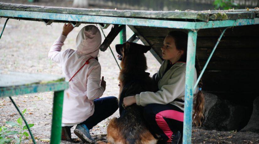 Как помочь бездомным животным в Киеве