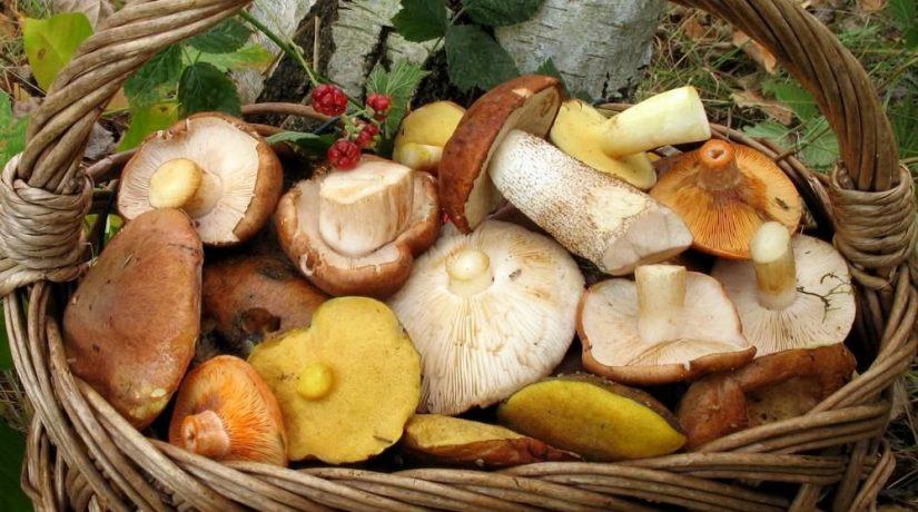 Киевлян предупреждают об опасности отравления грибами