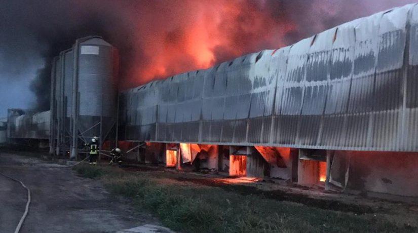 На птицефабрике в Киевской области сгорел большой ангар
