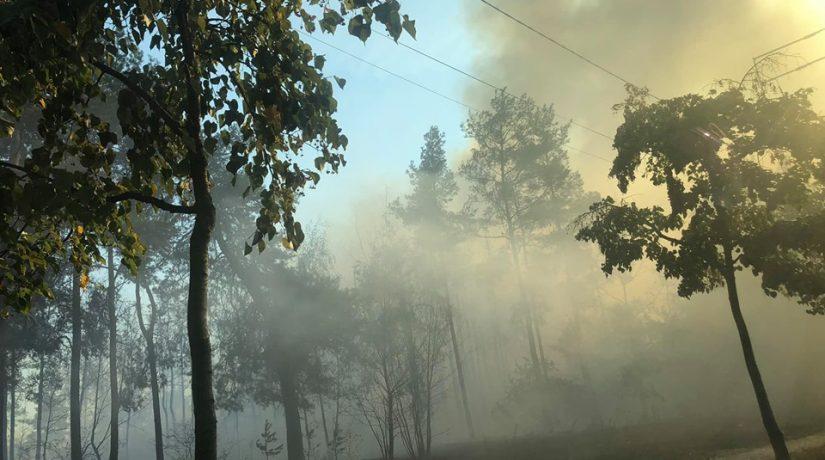 На улице Киото произошел пожар в лесопарковой зоне