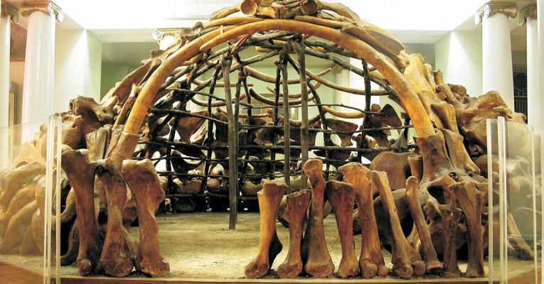 музей, кости