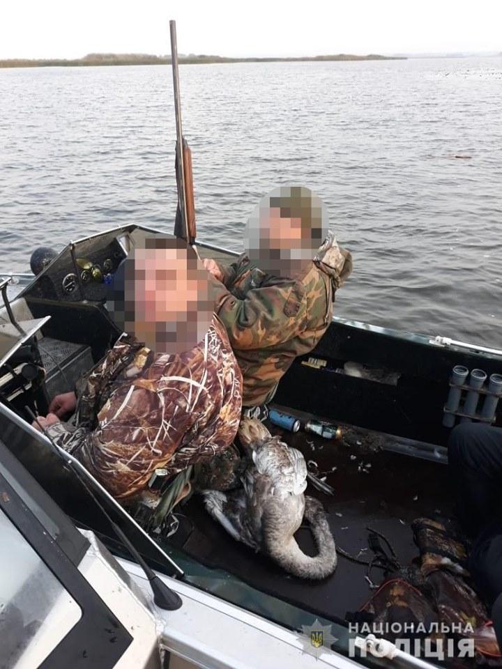 браконьеры, убитый лебедь
