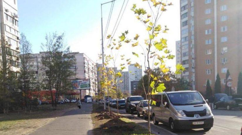 На улице Вишняковской высадили аллею из 30 платанов
