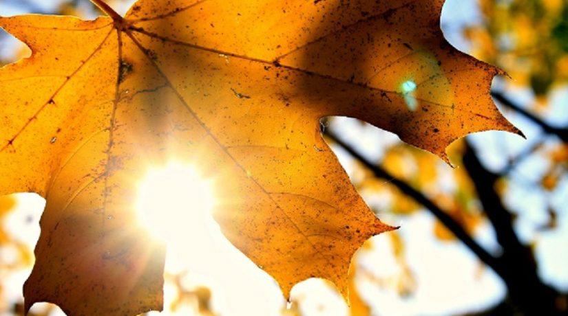 Октябрь в Киеве стал пятым подряд засушливым месяцем