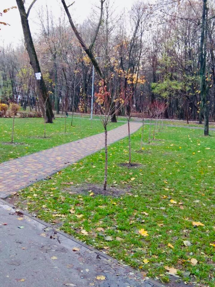Сырецкий парк, аллея сакур