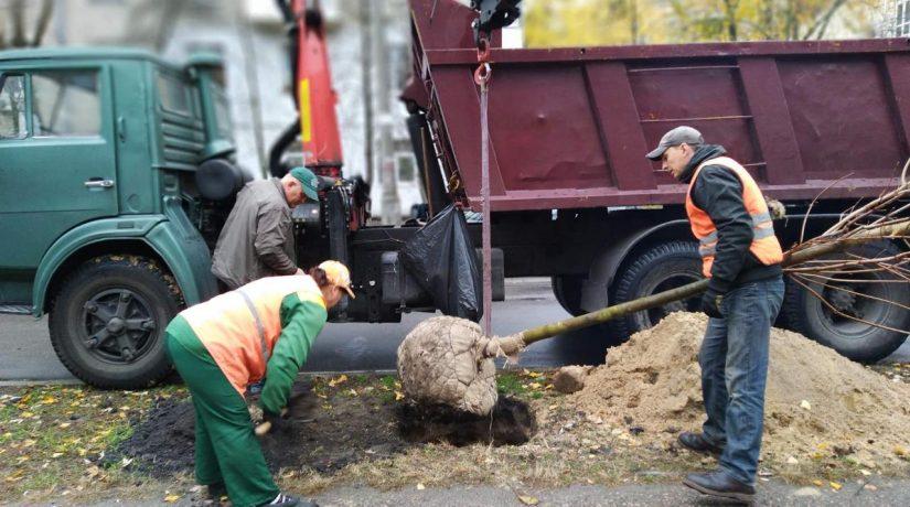В Киеве внедряют компенсационную высадку деревьев при ремонтах дорог