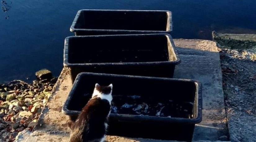 кот, рыба