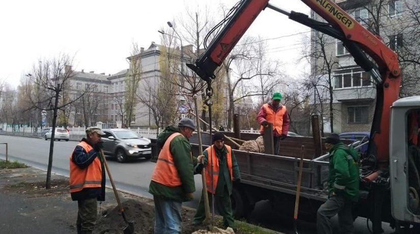 Вдоль улицы Красноткацкой высадили катальпы