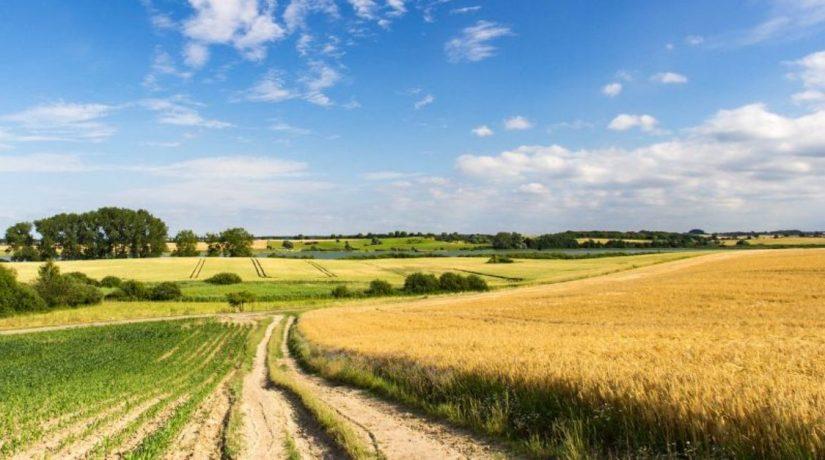 Верховная Рада поддержала законопроект об открытии рынка земель