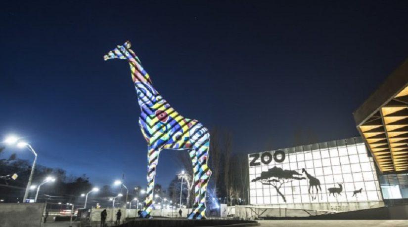 жираф, подсветка, зоопарк